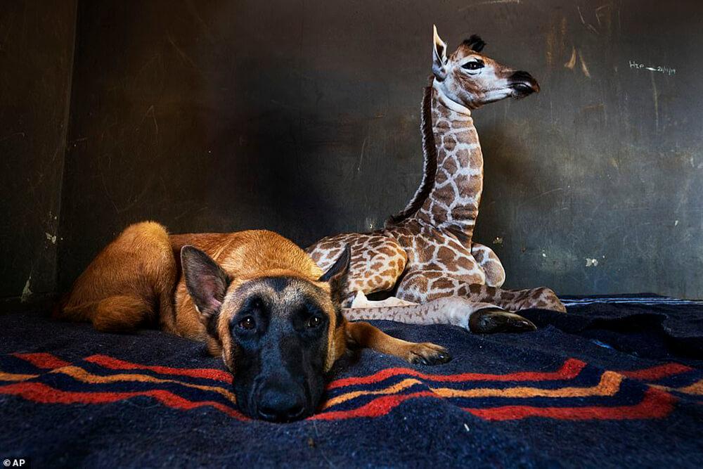 Jazz and dog