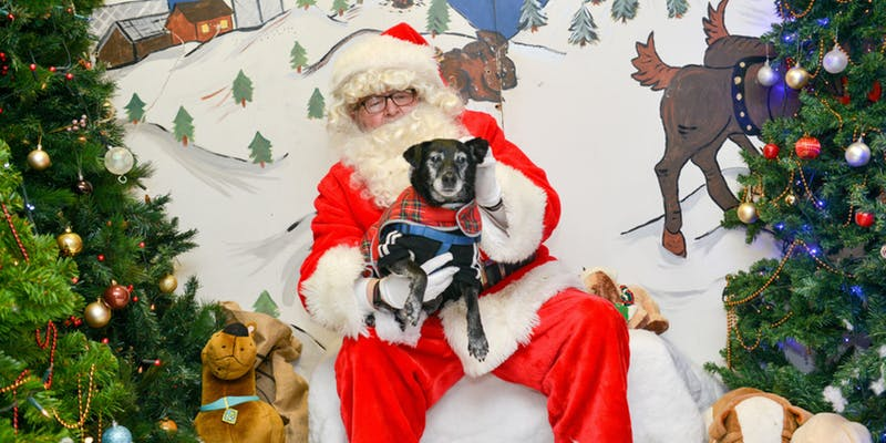 Santa Paws – Bring your cat or dog to see Santa!