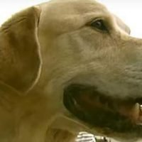 """After Being Separated from Her Dog for 10 Years, Owner Worries: """"Will My Dog Remember Me?"""""""