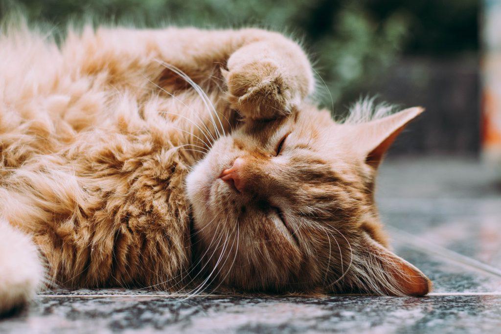 stubborn cat