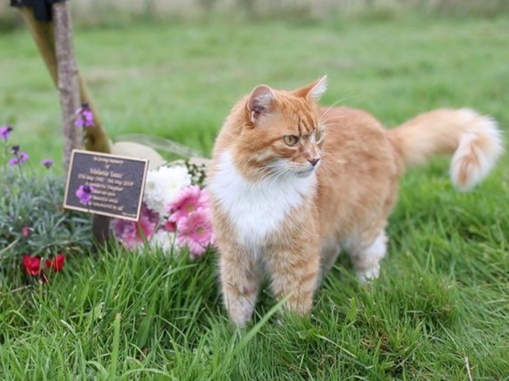 cat at the funeral