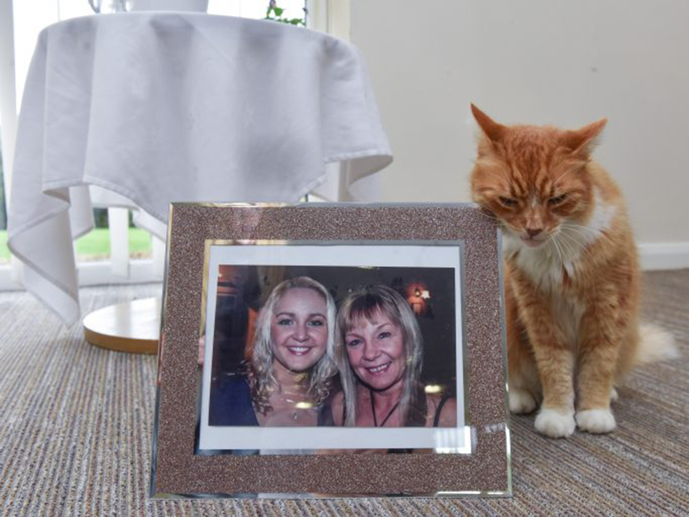 cat at the picture frame