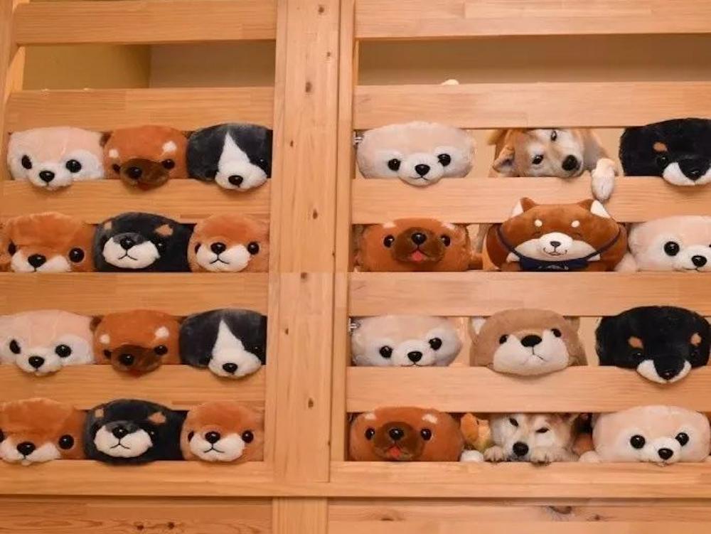 dog and teddy bears head