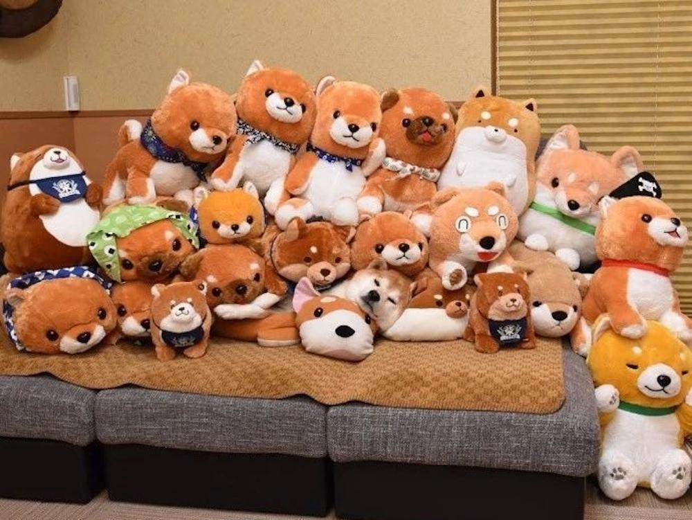 dog hides on the teddy bears
