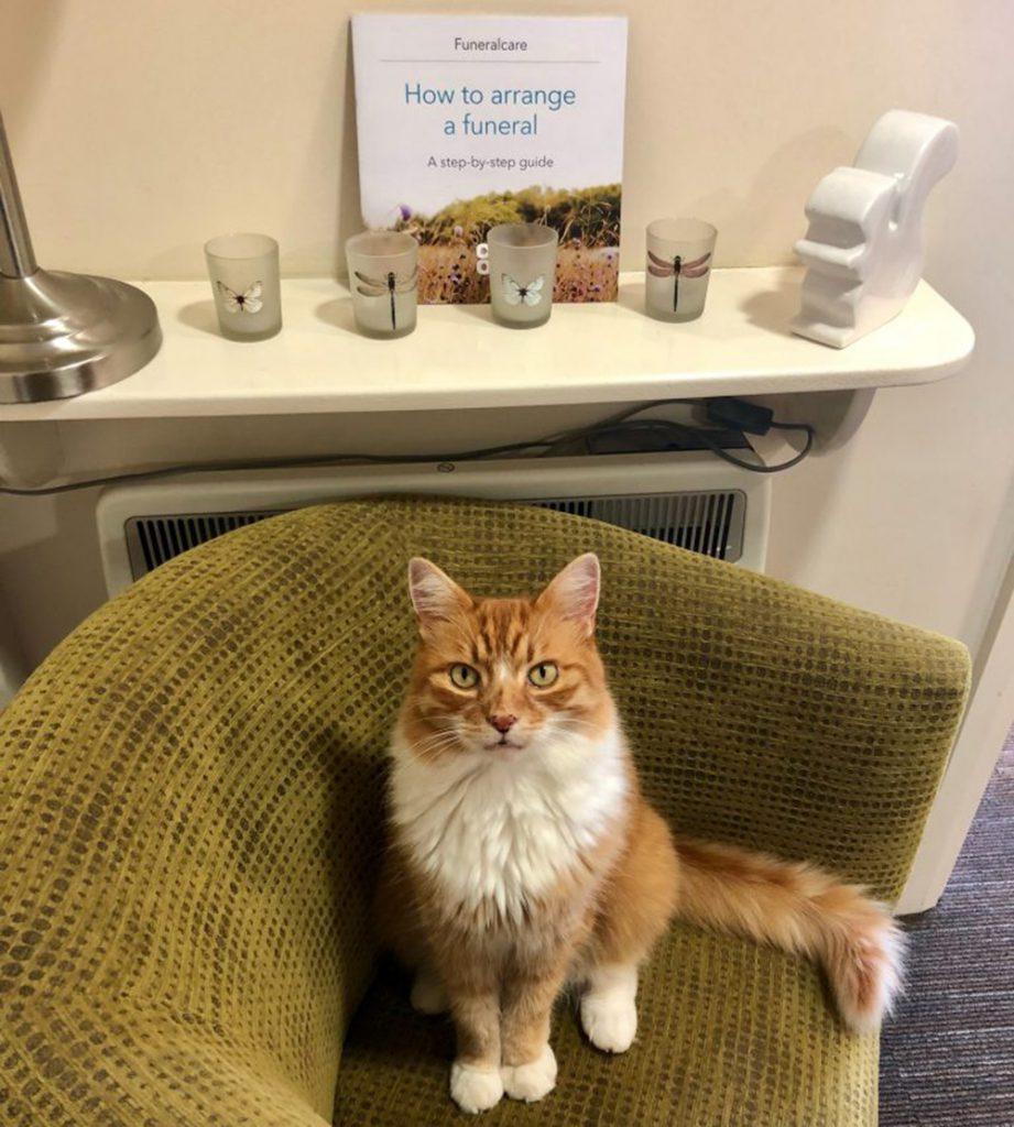 funeral cat comfort