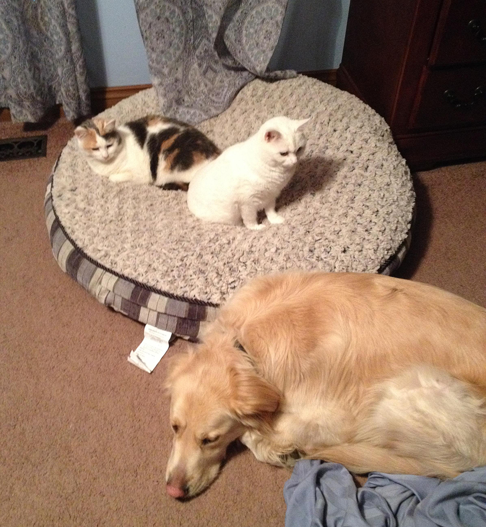 One dog and two cats.