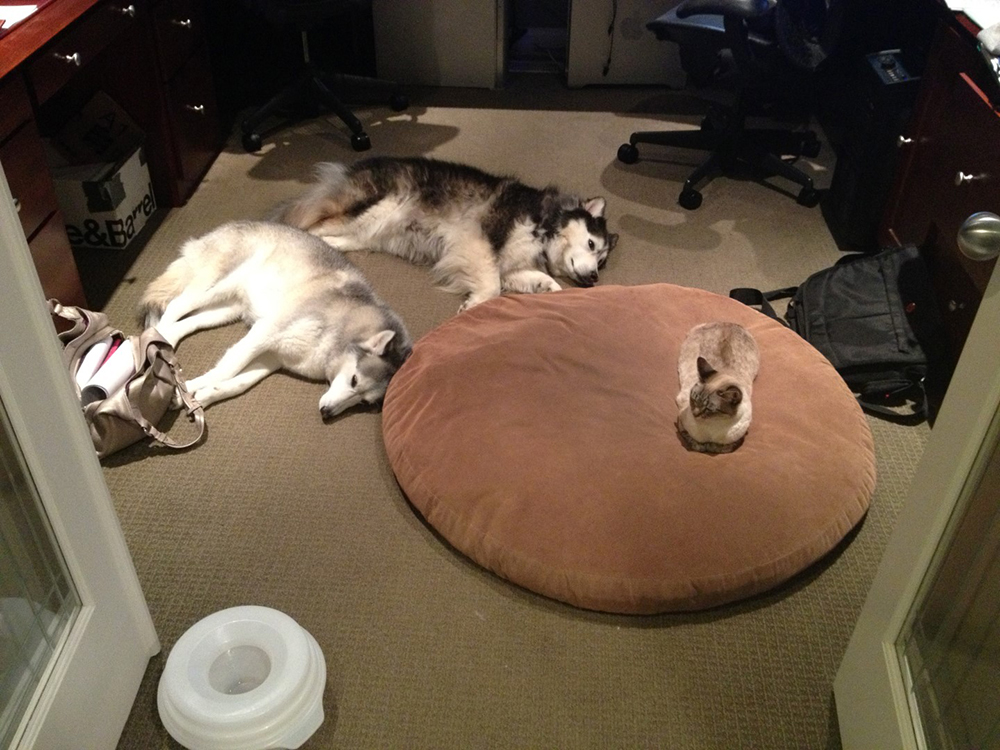 two dogs and one cat
