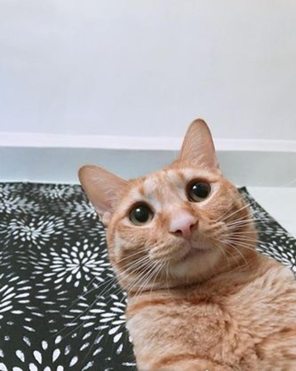 cat looking at netizen