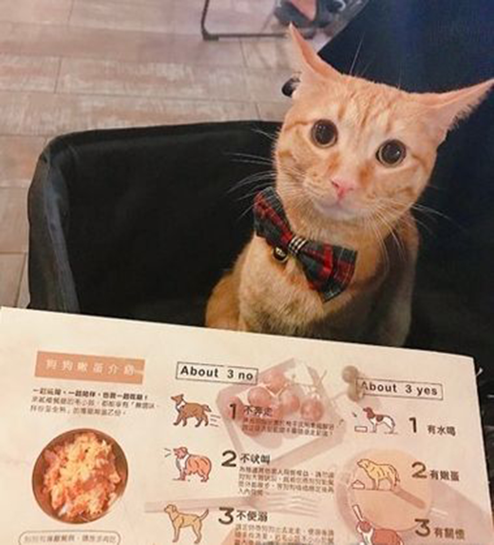 cat eat together with the netizen parents
