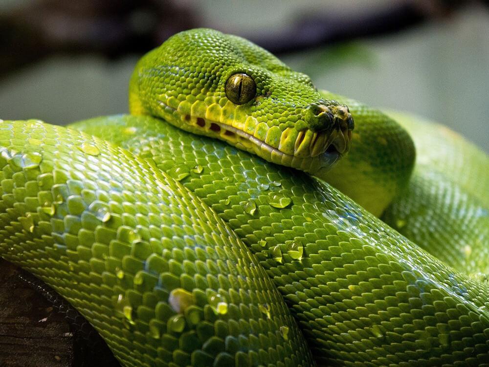 snakes hibernate