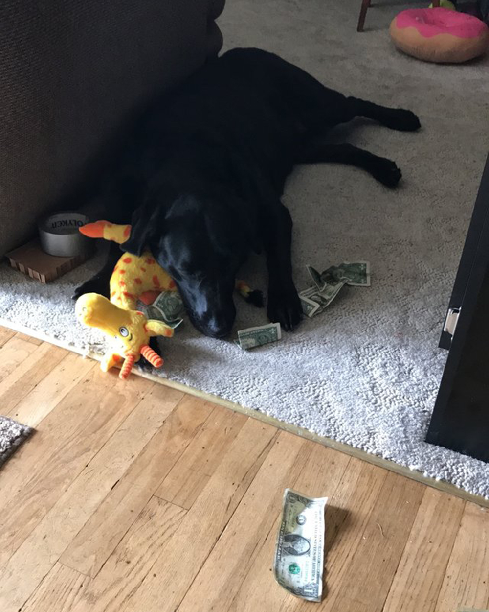 dog playing toys and money