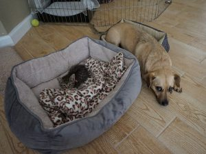 10 Dog Bed-Stealing Cats That Will Make You Crack a Smile