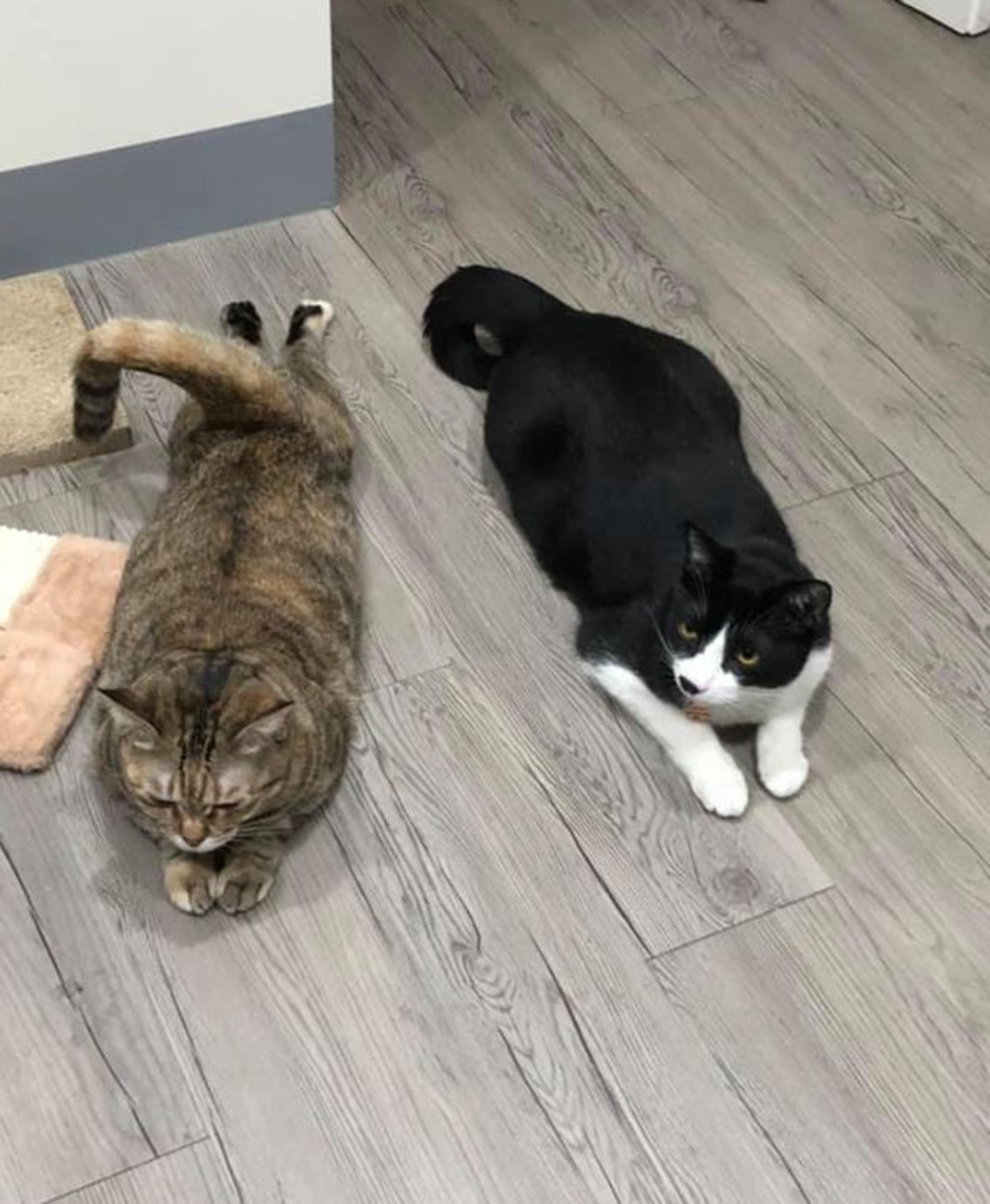 the two other adopted cat