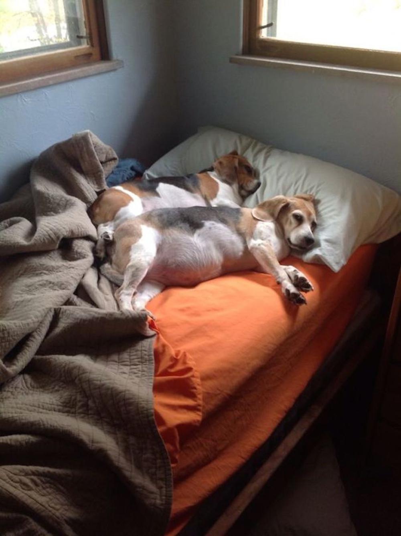sleeping dogs - 5