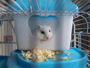6 Essential Hamster Summer Care Tips