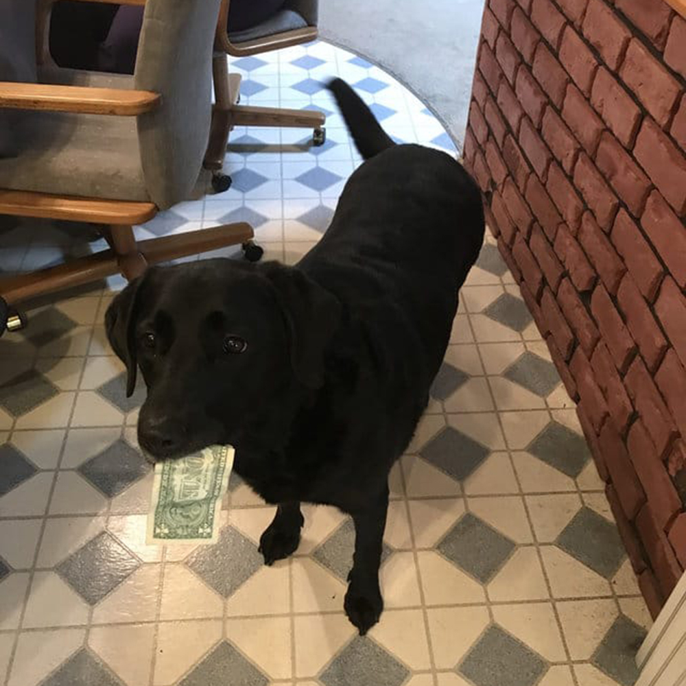 dogs Money from Her Family to Buy Treats