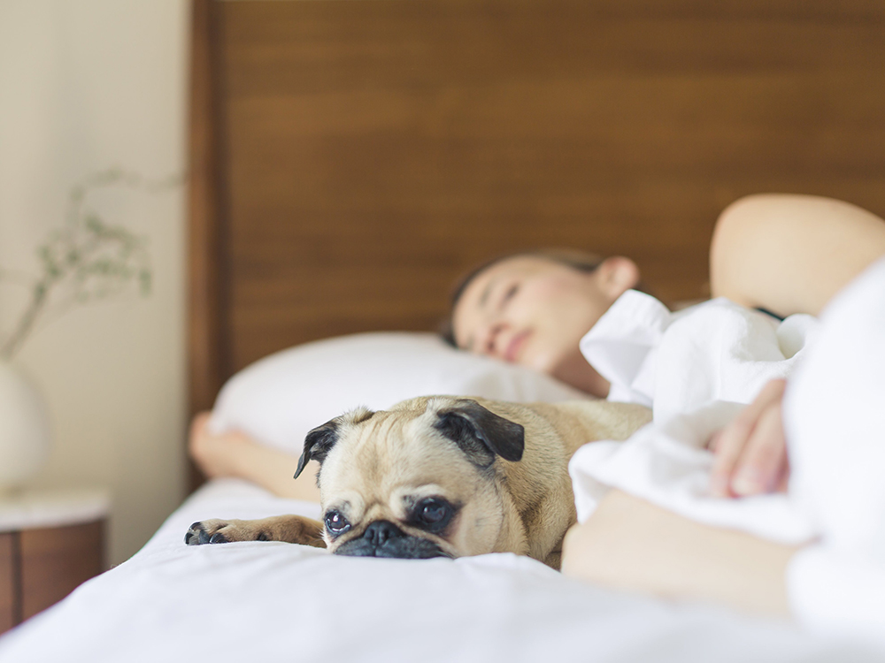 Women Sleep Better When Sharing a Bed with Their Dog Over Human Partners