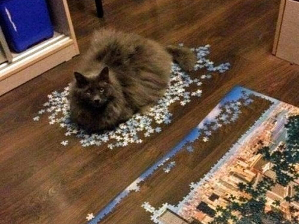 cat destroy the puzzle