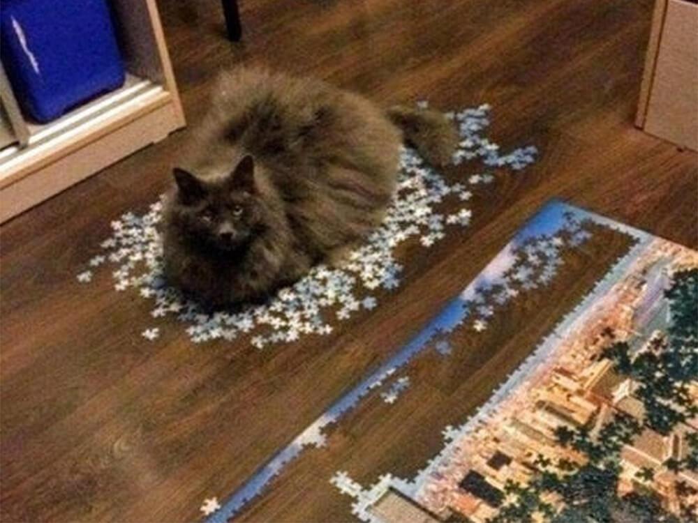 cat destroy the puzzle