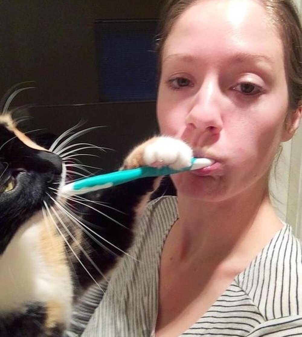 cat helping hand