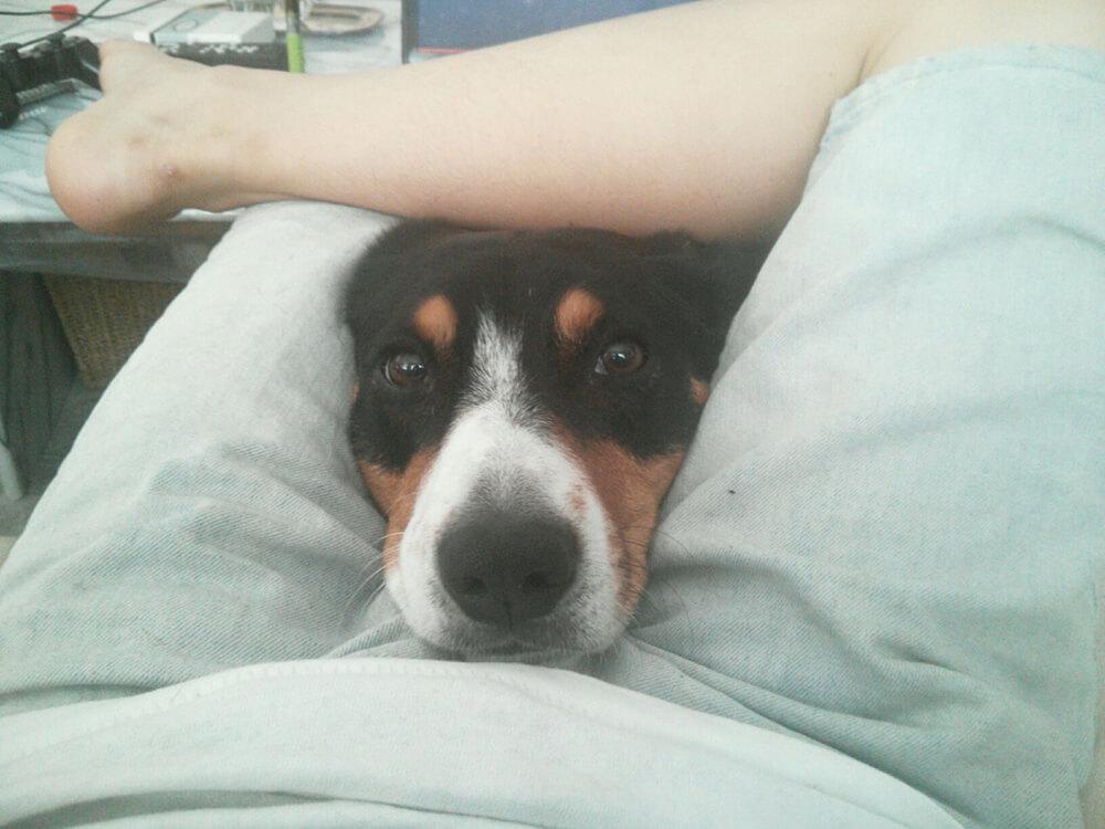 dog is in between the legs