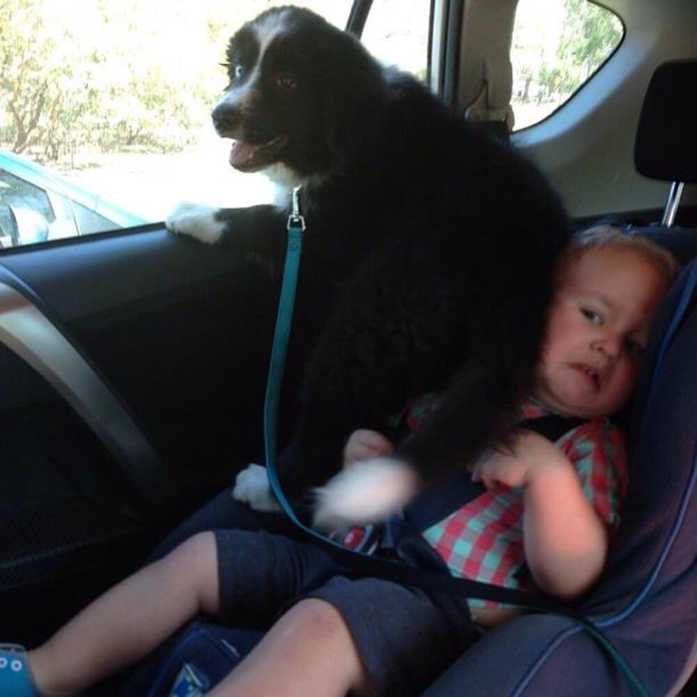 kid under the dog butt