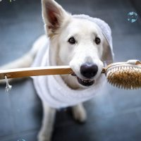 Cleaning Tips to Keep Your House Clean and Your Dog Healthy