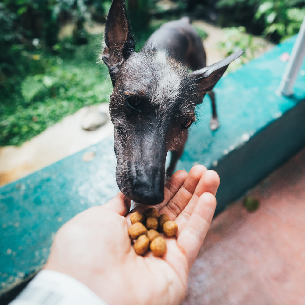 Avoid bribing your pooch