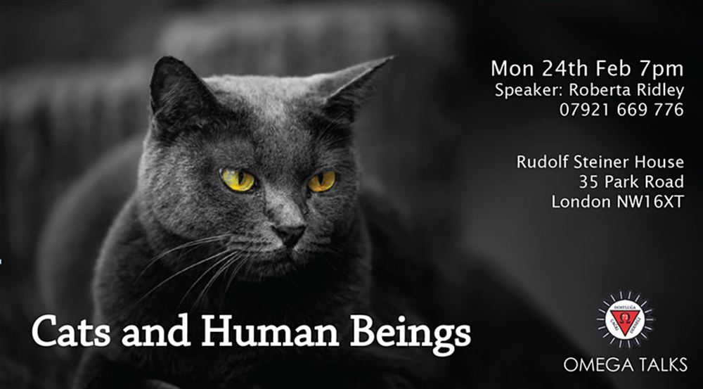 Cats and Human Beings