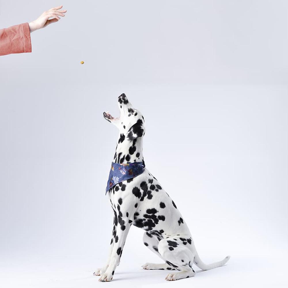 praise your dog