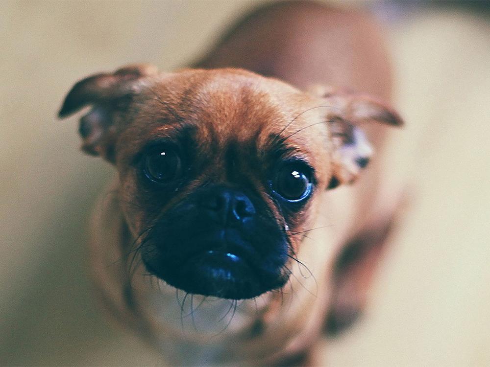 reward your dog random times