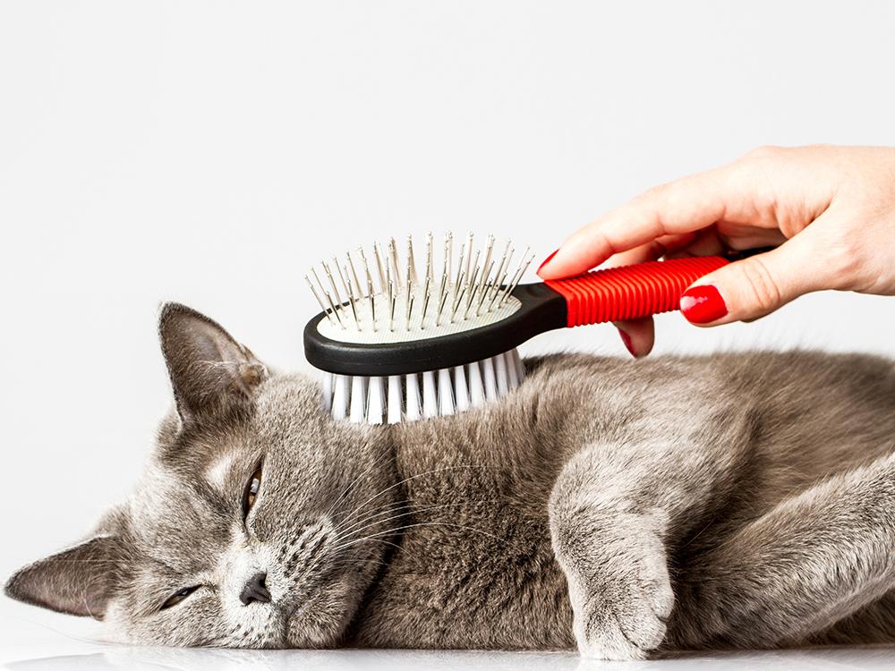 Brush-cat image