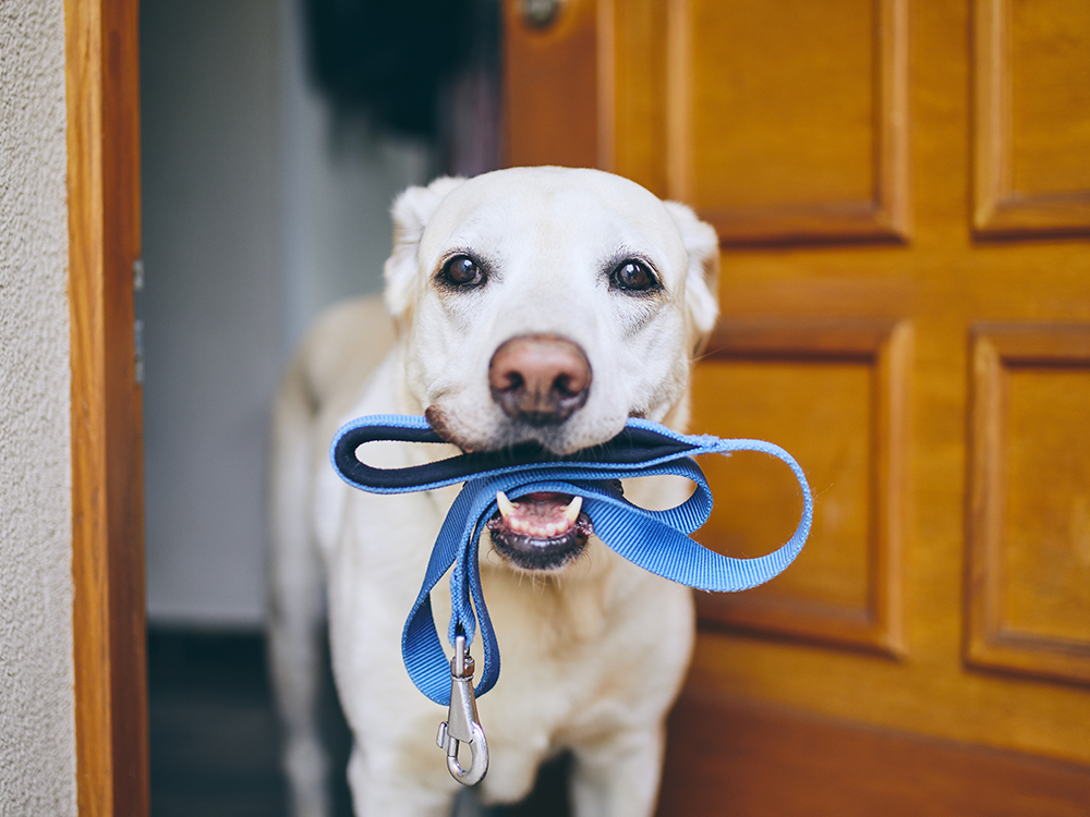 Covid-19: How to Keep Your Dog Safe during Your Walk