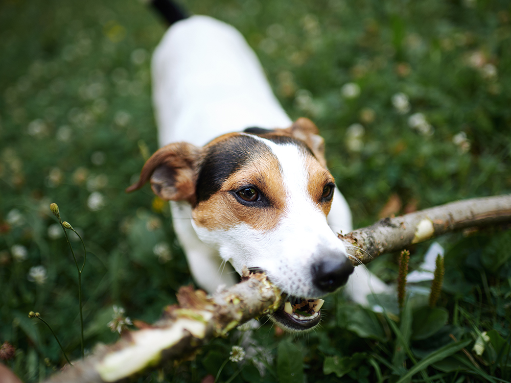 Coronavirus - How to Keep Your Dog Safe during Your Walk
