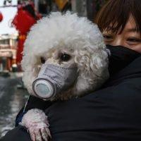 Can Dogs Get Coronavirus?