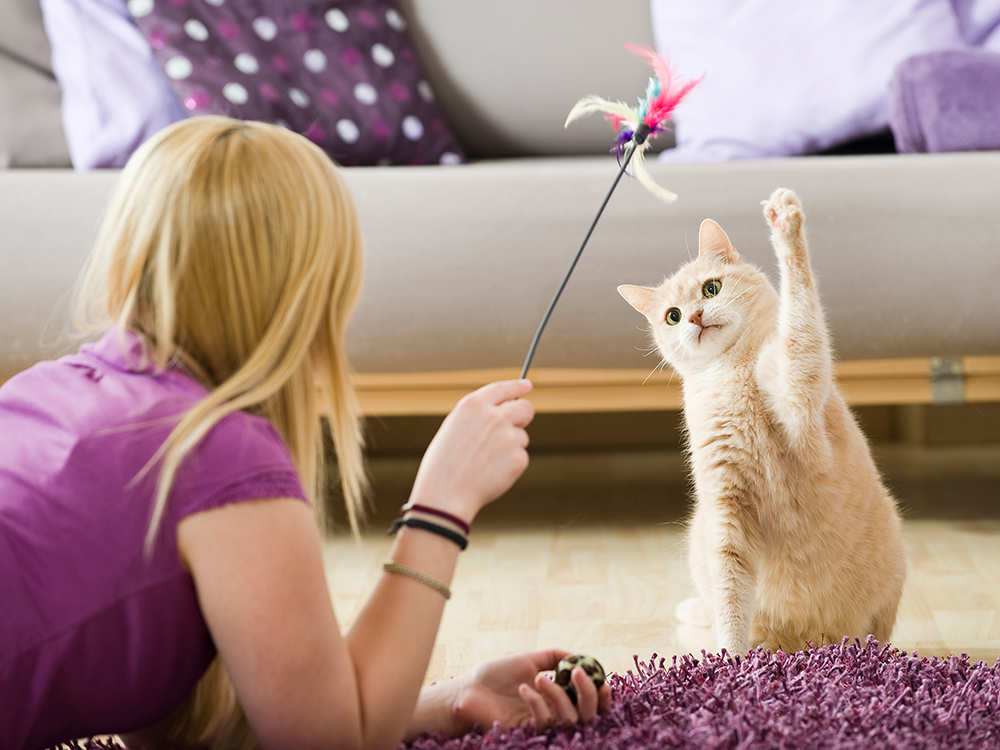 cat playing during self isolation