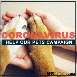CORONAVIRUS: Help Our Pets Campaign