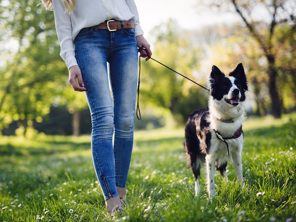 dog walking during coronavirus