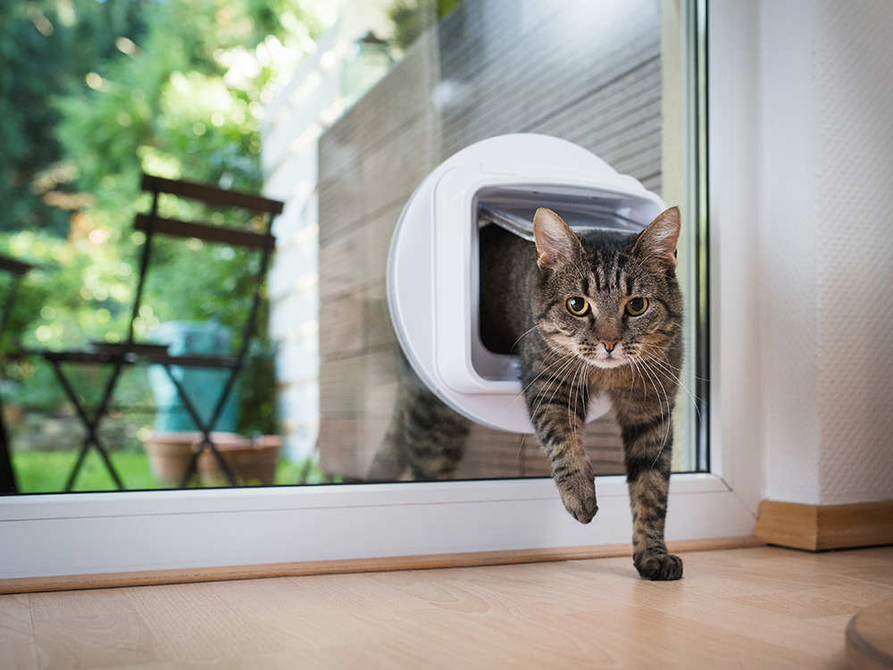 Covid-19: How to keep your cat safe