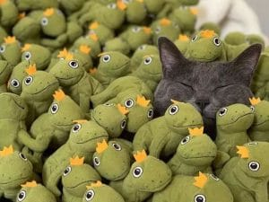 The Cat that Has Over 100 Frogs