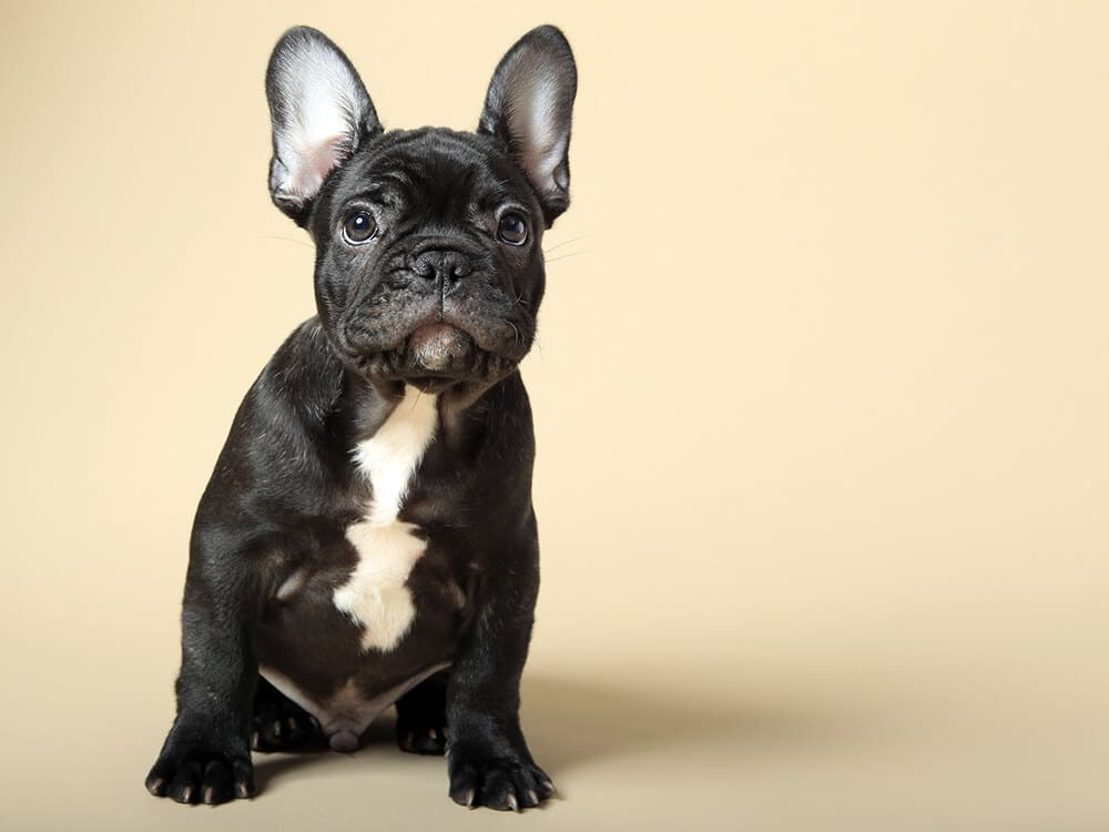 popular dog