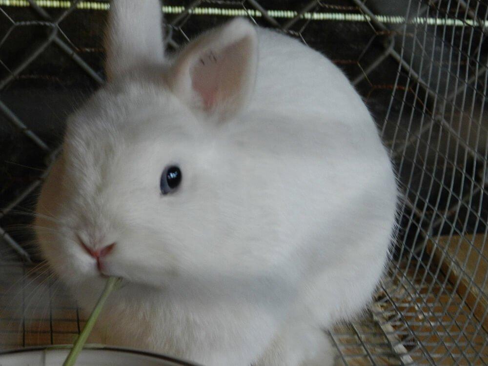 are netherland dwarf bunnies friendly