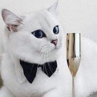 Famous British Shorthair Cats