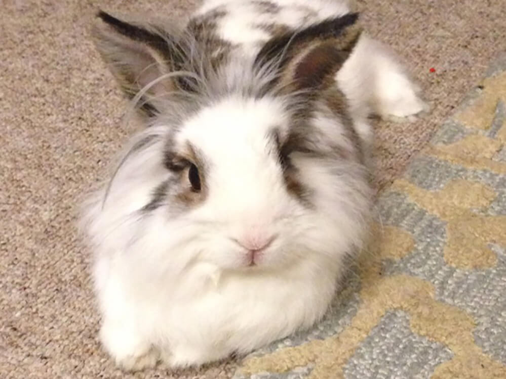 canlionhead rabbits live outside in winter