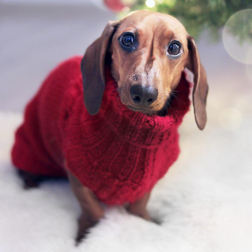 mini dachshund breeders