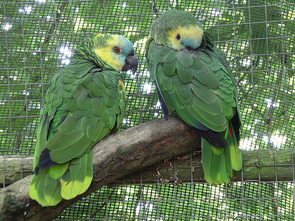 amazon rainforest parrot