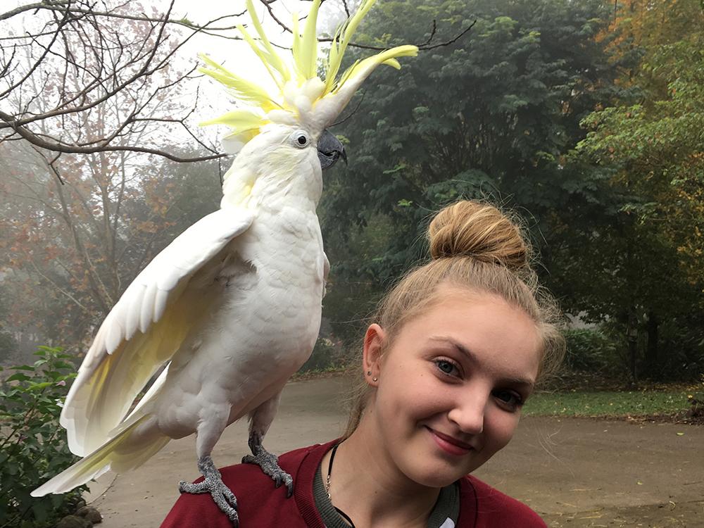 cockatoo temperament