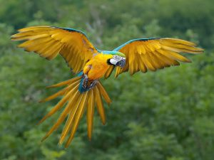 Macaw Breed Information