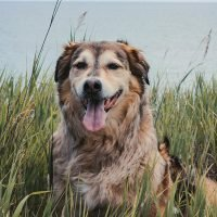 What You Need to Know About Hip Dysplasia in Dogs