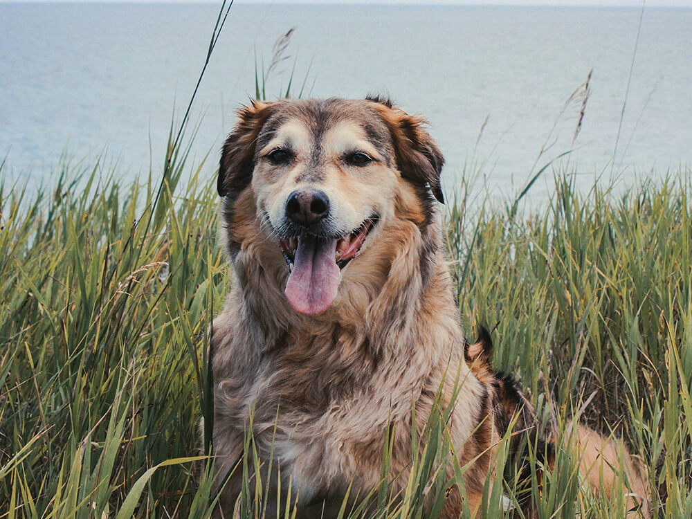hip dysplasia in dogs treatment